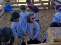 petting animals at Tate Farms